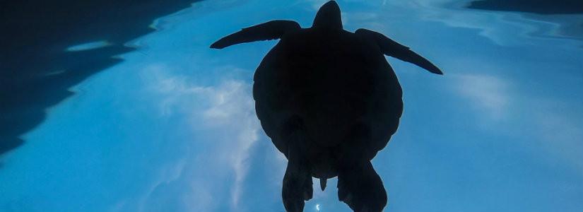 La Jolla snorkeling tours.